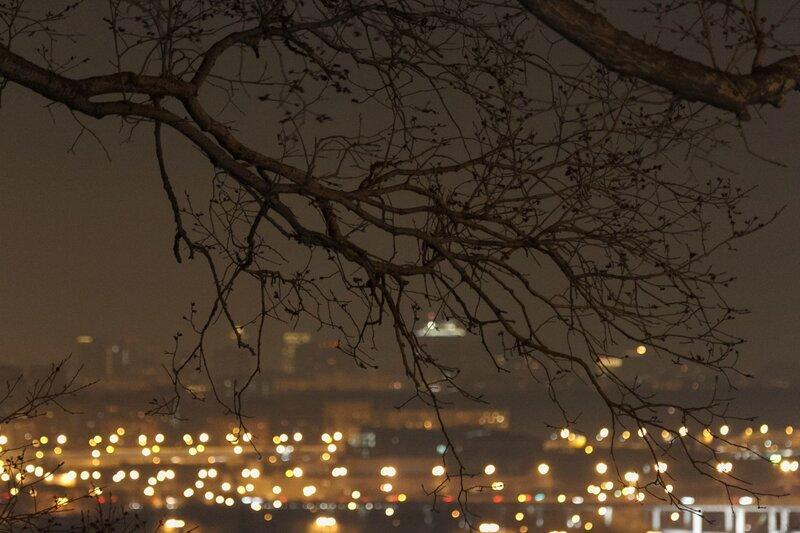 Дерево, Москва, Воробьевы горы