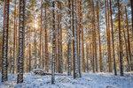 Лес после первого снега.
