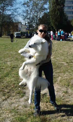 выставка, выставка собак, животные, Боярка, ККУ, Кинологический Клуб Украины, питомцы, чемпионы, соревнования, самоед,