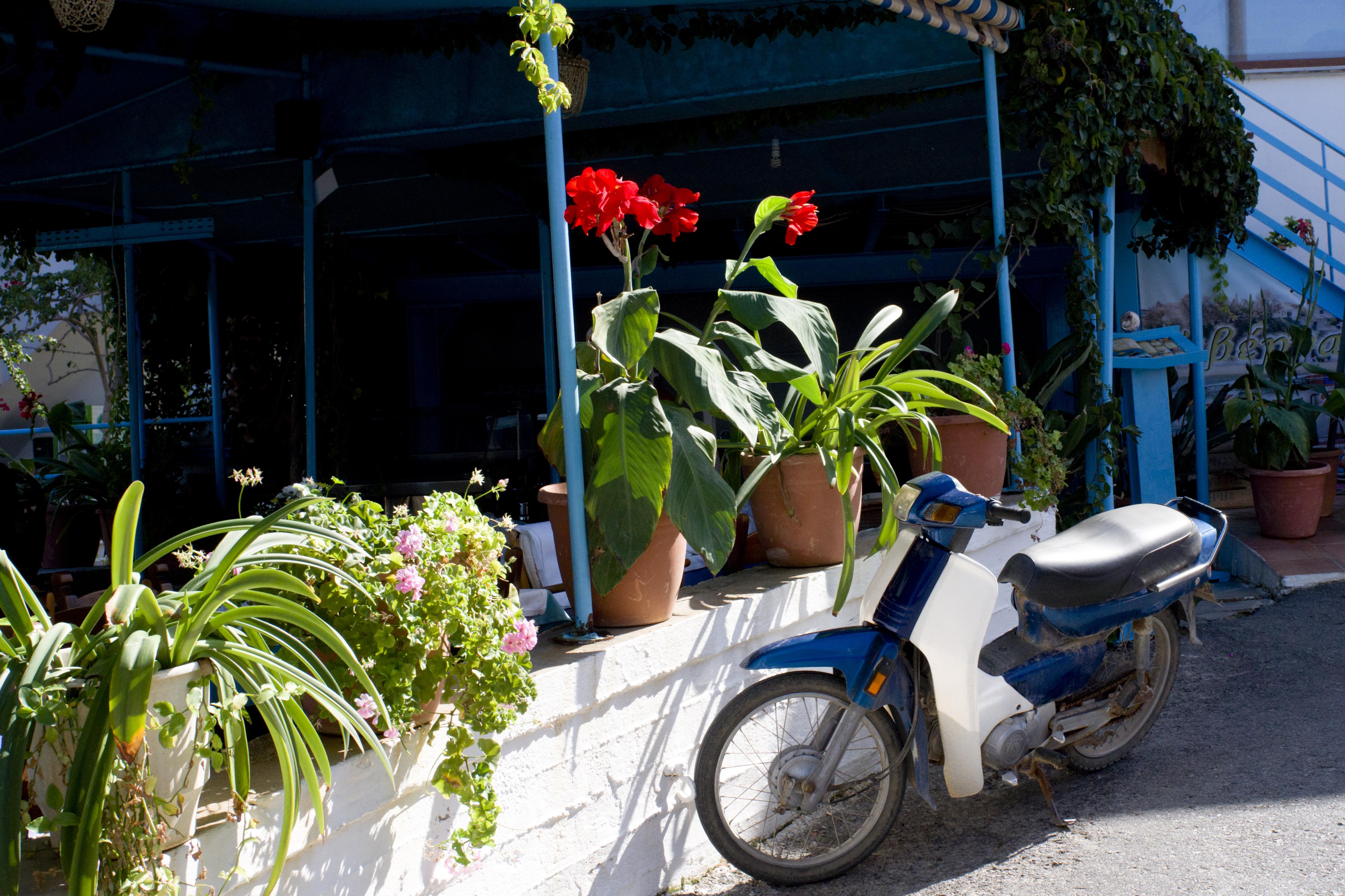 Цветы и  мотоцикл