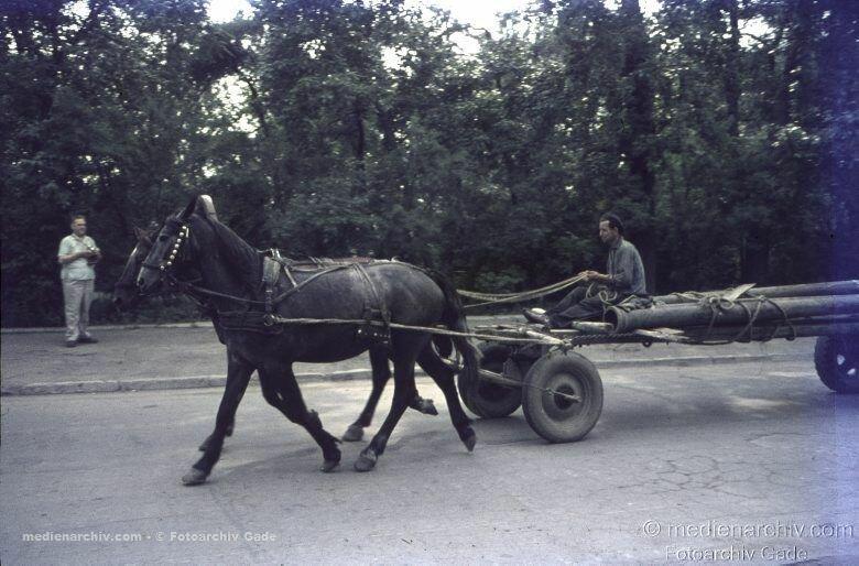 30. Гужевой транспорт на улицах города