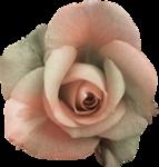 MagicalReality_VinMem1_green-pink rose.png