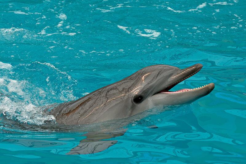 Пятигорский дельфинарий