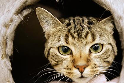 Кота спасшего ребенка номинировали на британскую премию