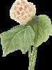 https://img-fotki.yandex.ru/get/6804/160780412.f07/0_192058_59d0977a_XS