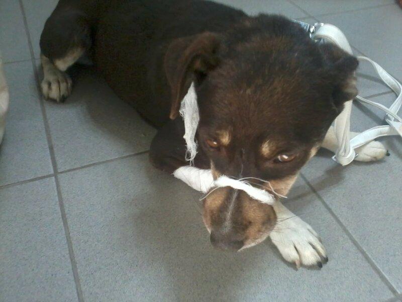 собаку спасли от смерти