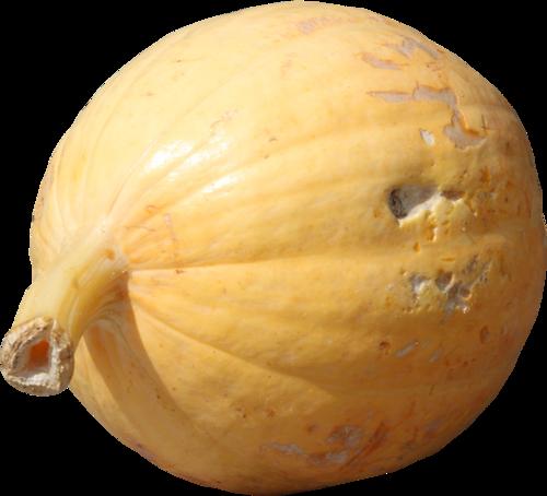priss_flutteringleaves_pumpkin4.png