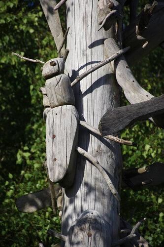 Жуки против дятлов