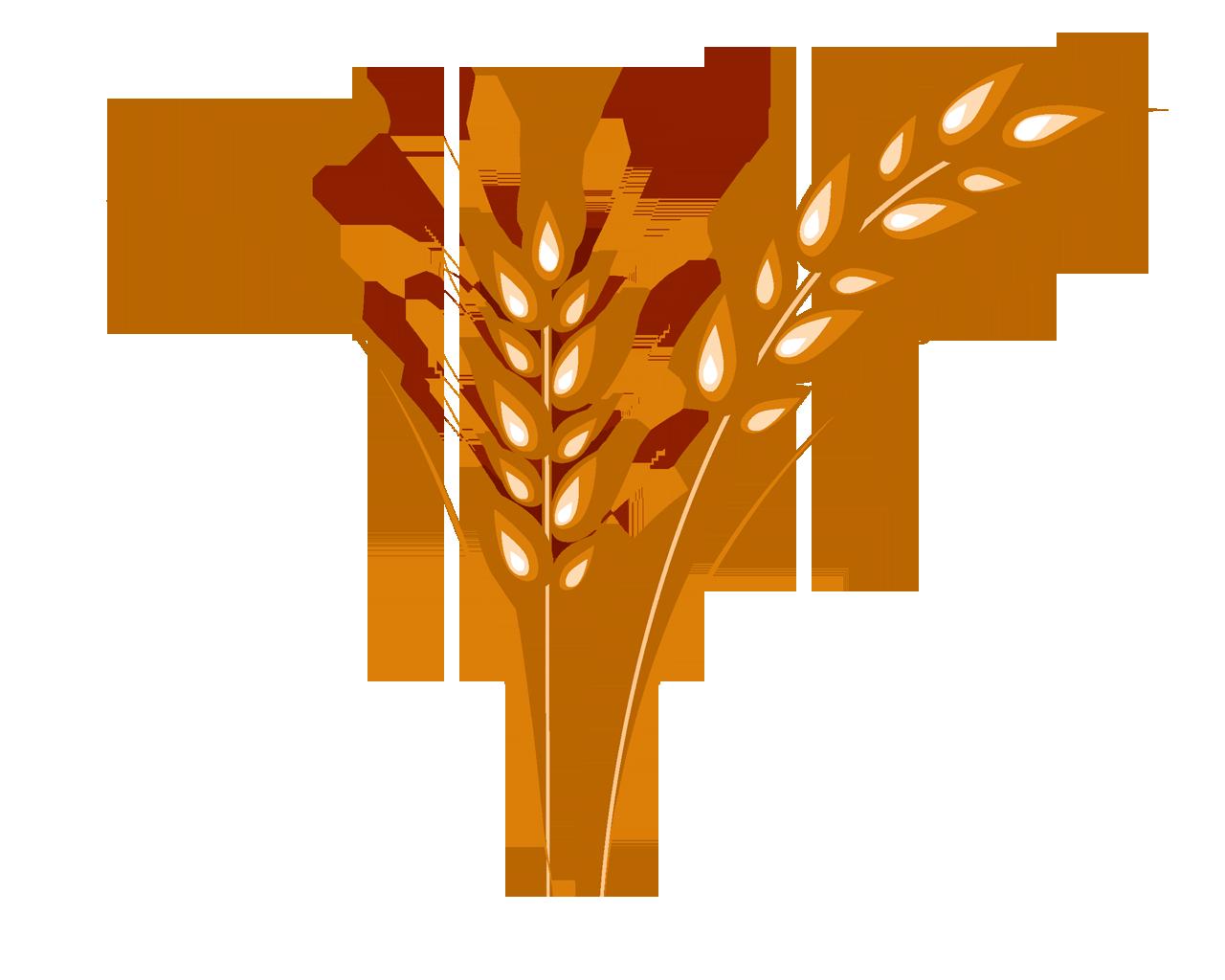 Зерна пшеницы фото