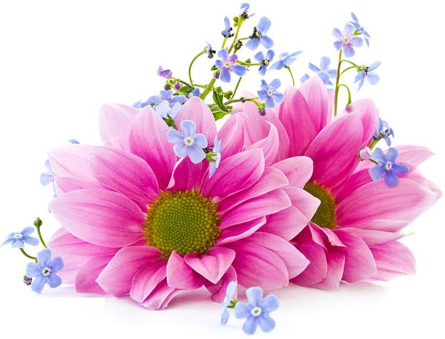 Картинка на прозрачном фоне цветы