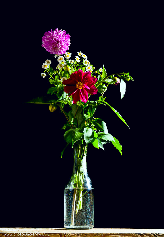 9. Вот наши цветы на черном фоне после обработки. Уроки фотографии для владельцев любительских зеркалок.