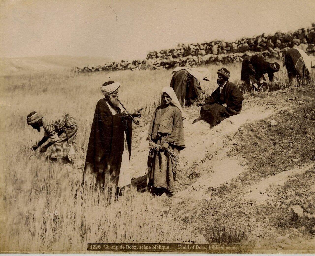 На поле Боаза. Сцена из Библии