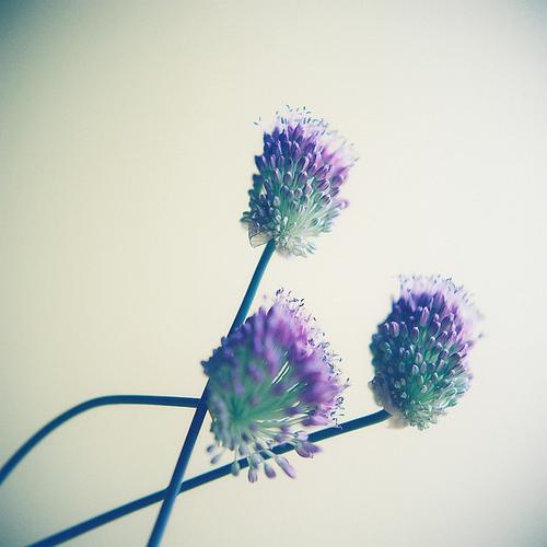 Send no flowers, Kumiko Sekiguchi.jpg