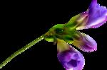 весенние цветы (13).png