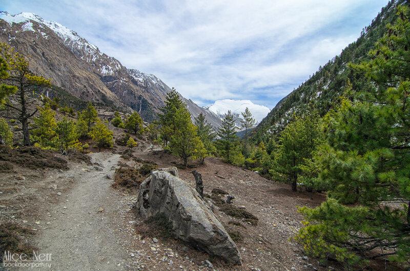 лес, горы, гималаи, непал