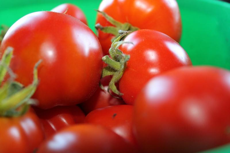 Три основных правила по выращиванию здоровых помидоров
