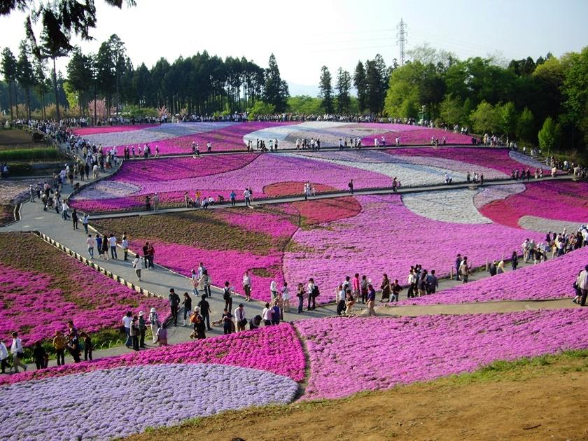 Цветущий розовым японский парк Хицудзияма. Фотографии 0 141ad0 9e255980 orig