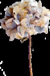 Lilas_Hydrangeas-fragrance_elmt (1).png