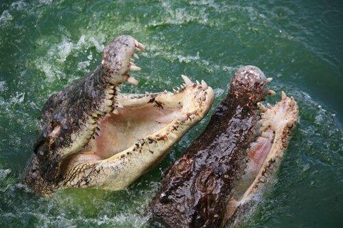 В гостях у аллегаторов