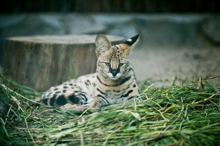 Бэби-бум в Новосибирском зоопарке. 25 препозитивнейших фото