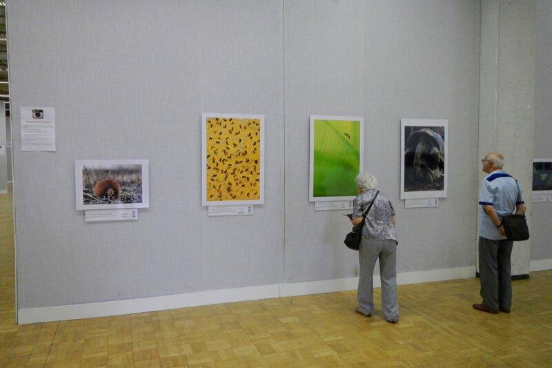 На фестивале дикой природы Золотая Черепаха