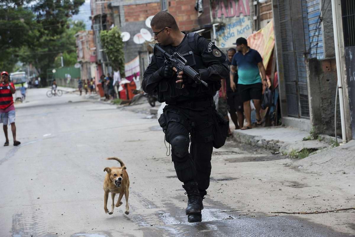 Антиполицейский пес: не порву, так покусаю