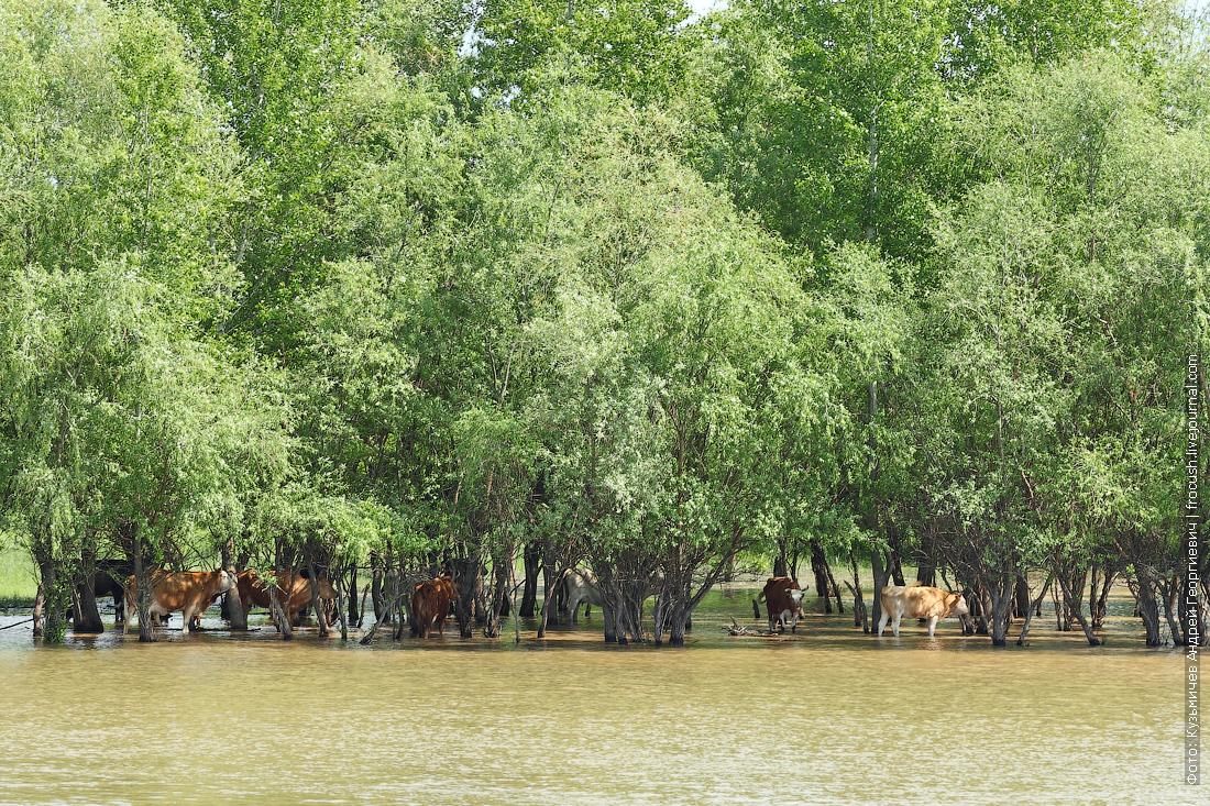 круиз в Казахстан на теплоходе река Бахтемир