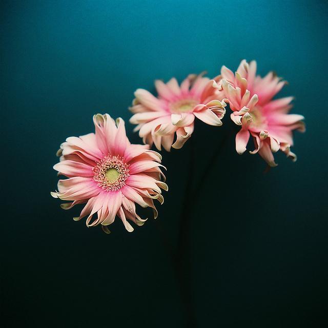 Send no flowers, Kumiko Sekiguchi6_1280.jpg