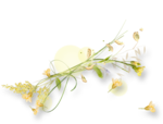 meadowbut_cluster5 (4).png
