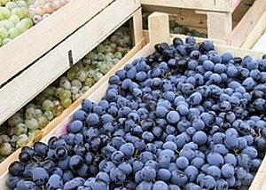 Почти 60 млн долларов потеряли виноделы Молдовы от эмбарго России