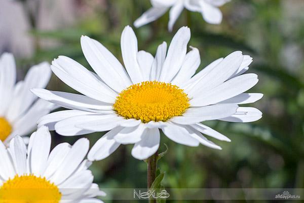 Я люблю все цветы, выпуск 114 | Разные цветы.