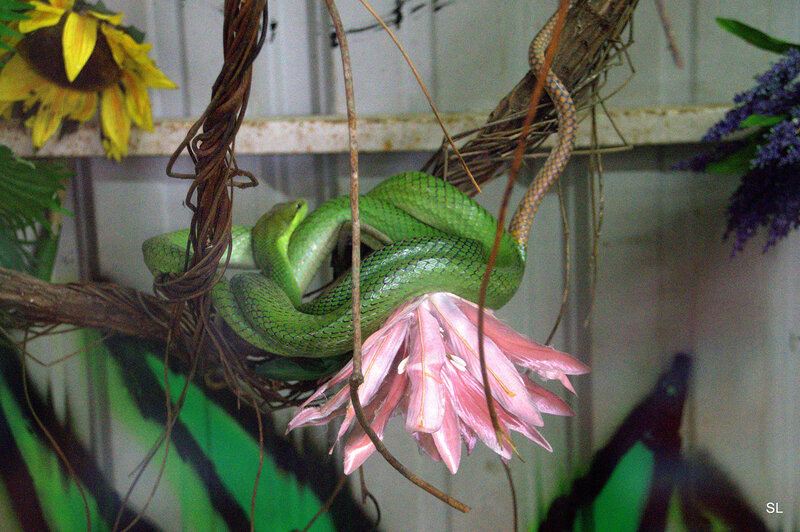 Храм змеи