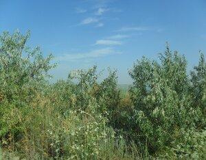 Август, на Ясенской косе, туризм, 2014 год