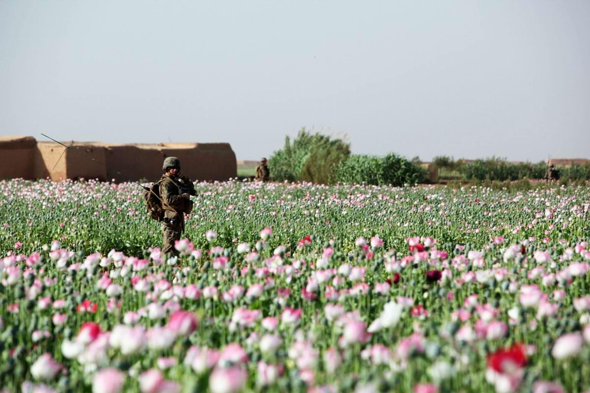 Посреди маковых полей Афганистана - фотографии военнослужащих корпуса морской пехоты США (27)