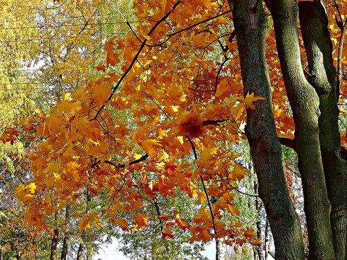 Золотая осень....