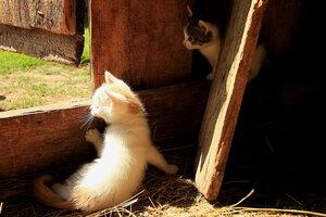 Про кота Ваську