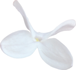 ldw_UnderPalmTree_flower-white3.png