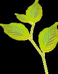 Lemony-freshness_elmt (48).png