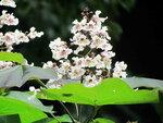 Остров цветов Майнау на Боденском озере