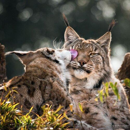 Животные порой склонны к большему проявлению чувств, чем люди