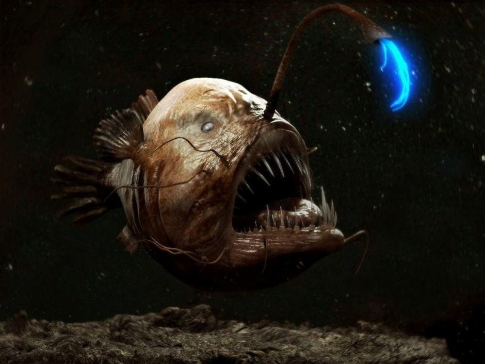 Зло таится под водой: страшные морские создания