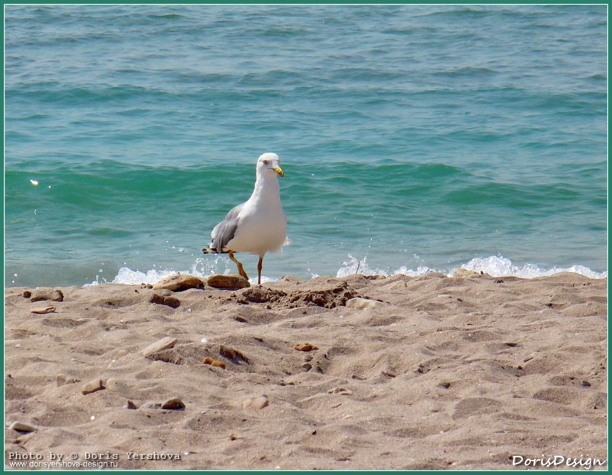 море, берег моря, Крым, чайка крупным планом на берегу моря, вода, песок, лето