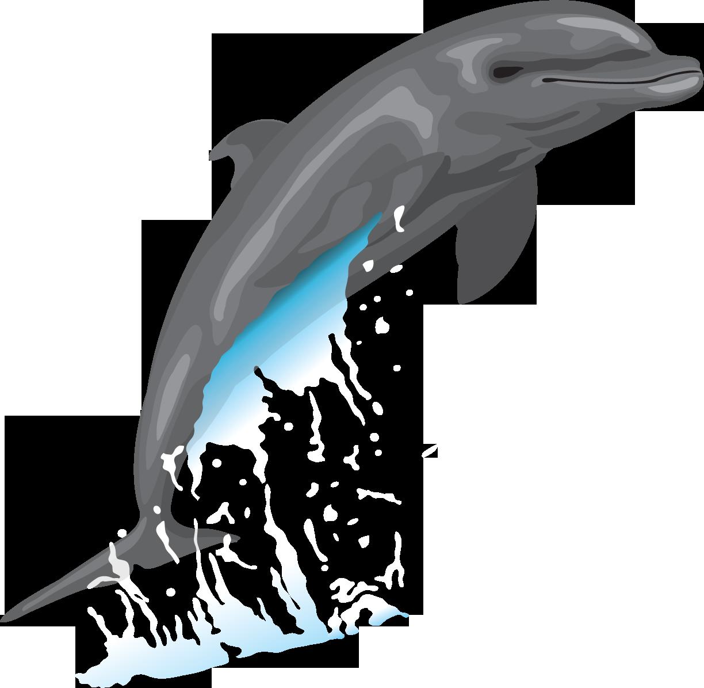 картинки дельфины на белом фоне выражение чему только