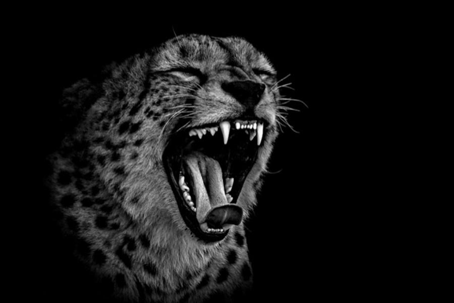 Лукас Холас. Черно белые портреты животных 0 1419de 6c3a761c orig