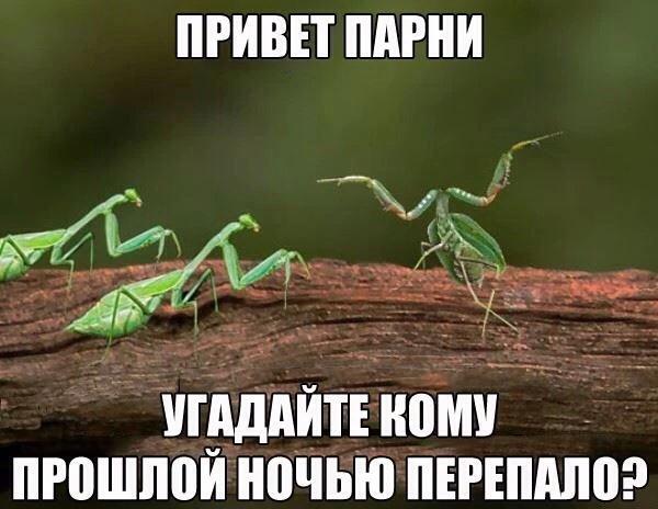 0_16f286_98801e41_orig.jpg
