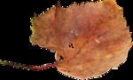 la_leaf 1.png
