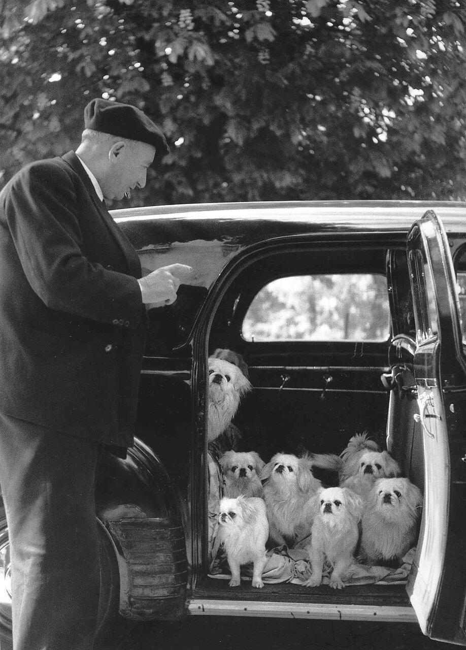 1953. Собаки маркиза де Куэвас