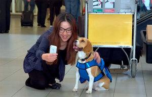 amsterdam-airport-dog.jpg