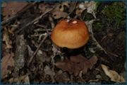 http://img-fotki.yandex.ru/get/6808/15842935.142/0_d099e_5e98b636_orig.jpg