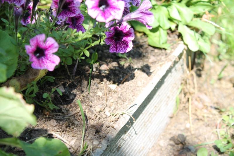 Окантовки для клумб, цветников-шифер